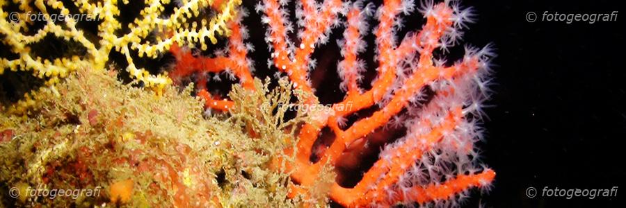 Esplorazioni scientifiche ed ecosistemi di profondità
